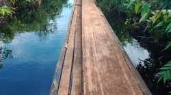 Perambahan Hutan Marak Di Desa Sungai Linau Kecamatan Siak Kecil Kabupaten Bengkalis