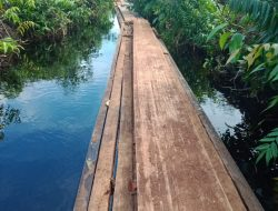 Inisial Kn Pelaku Perambahan  Hutan / Ilegal Logging Di Desa Sungai Linau Kecamatan Siak Kecil Kabupaten Bengkalis