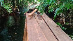 4 Toke Balak Membabat Hutan Di Sungai Sembilan Dan Berjalan Aman