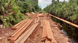 Perambahan Hutan Marak Di Cagar Biosfer Oknum Aparat Di Duga Terlibat