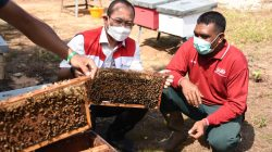 Budidaya Lebah Madu Ramah Lingkungan Pertamina Berbuah Manis
